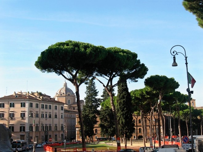 Rome: umbrella pines and ruins