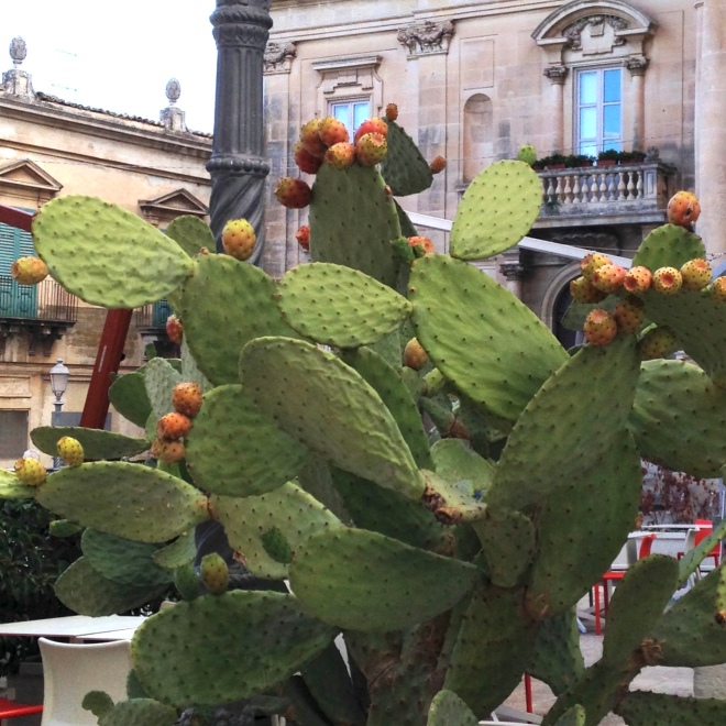 cactus in piazza in Ragusa Ibla